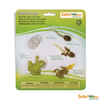 safariltd-life-cycle-of-a-frog-set-269129-0[1]
